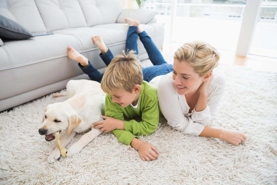 Pet Stains & Odour Removal